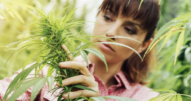 New Study Shows 52% of Americans Support Legalization