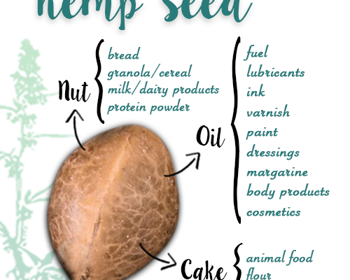 Infographic: Uses for Hemp Seeds