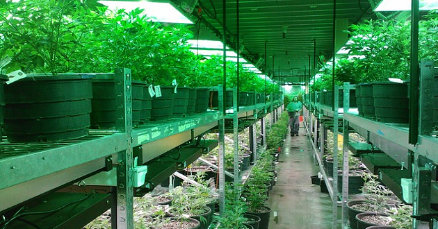 Recreational Marijuana States Brought in $200M in Taxes