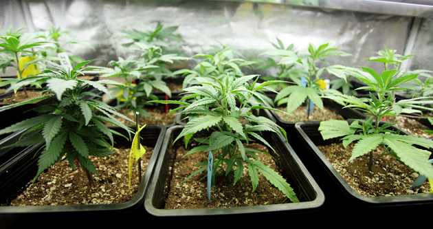 Arizona Receives B- on Medical Marijuana Industry Report